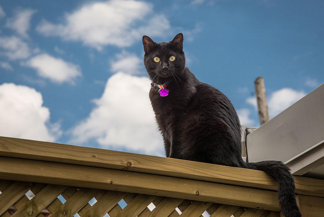 Un chat noir à contre-jour